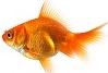 fish_hero